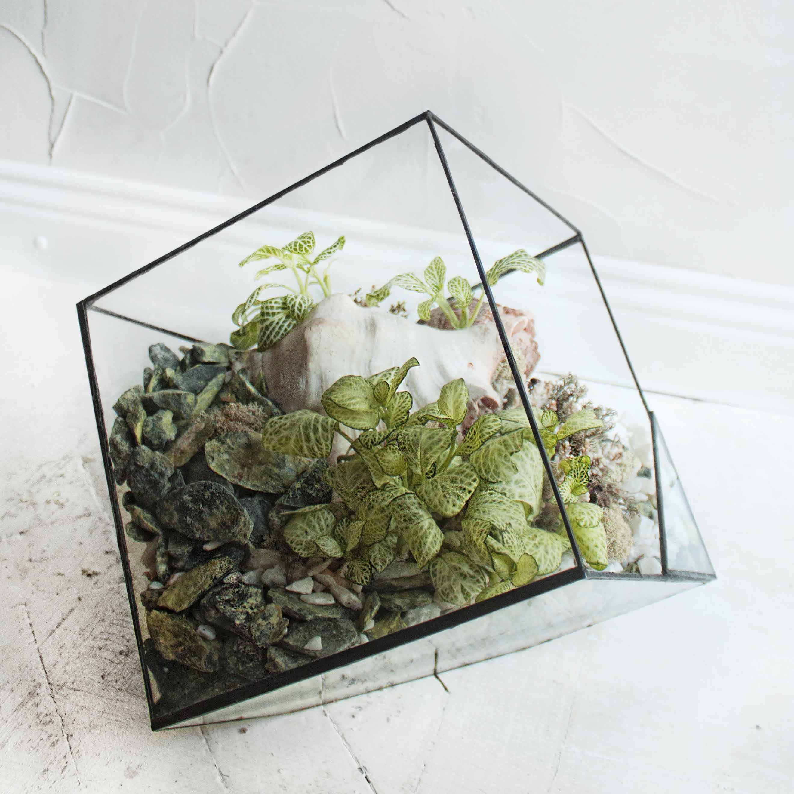 geometric glass plant florarium gift геометрия флорариум подарок стекло растения
