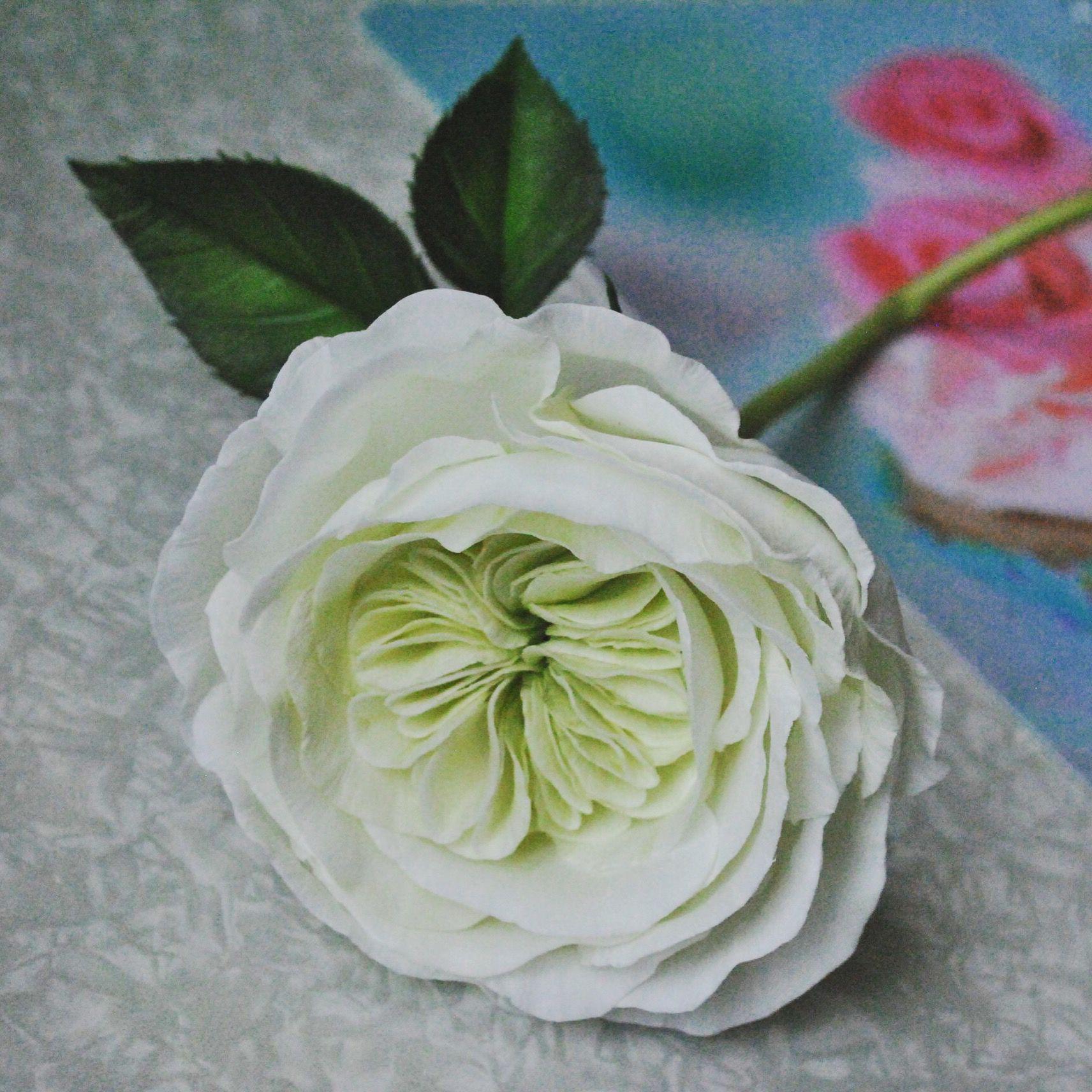 руками белые мастер класс роза подарок цветы своими