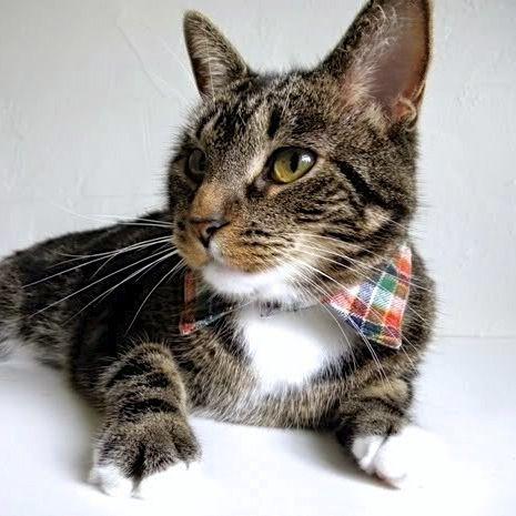 домашние кошек ремесла животных переработка одежды мода воротник для животные