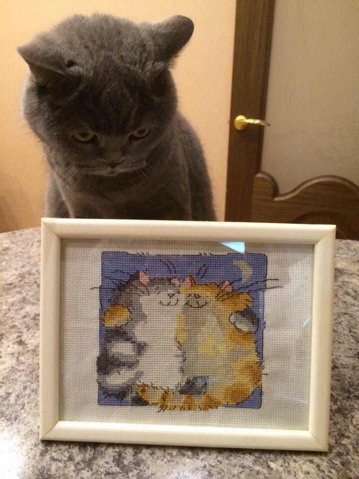 крестом коты рыжий луналюбовь вышивка кот серый романтика кошка интерьер пара ночь картина подарок