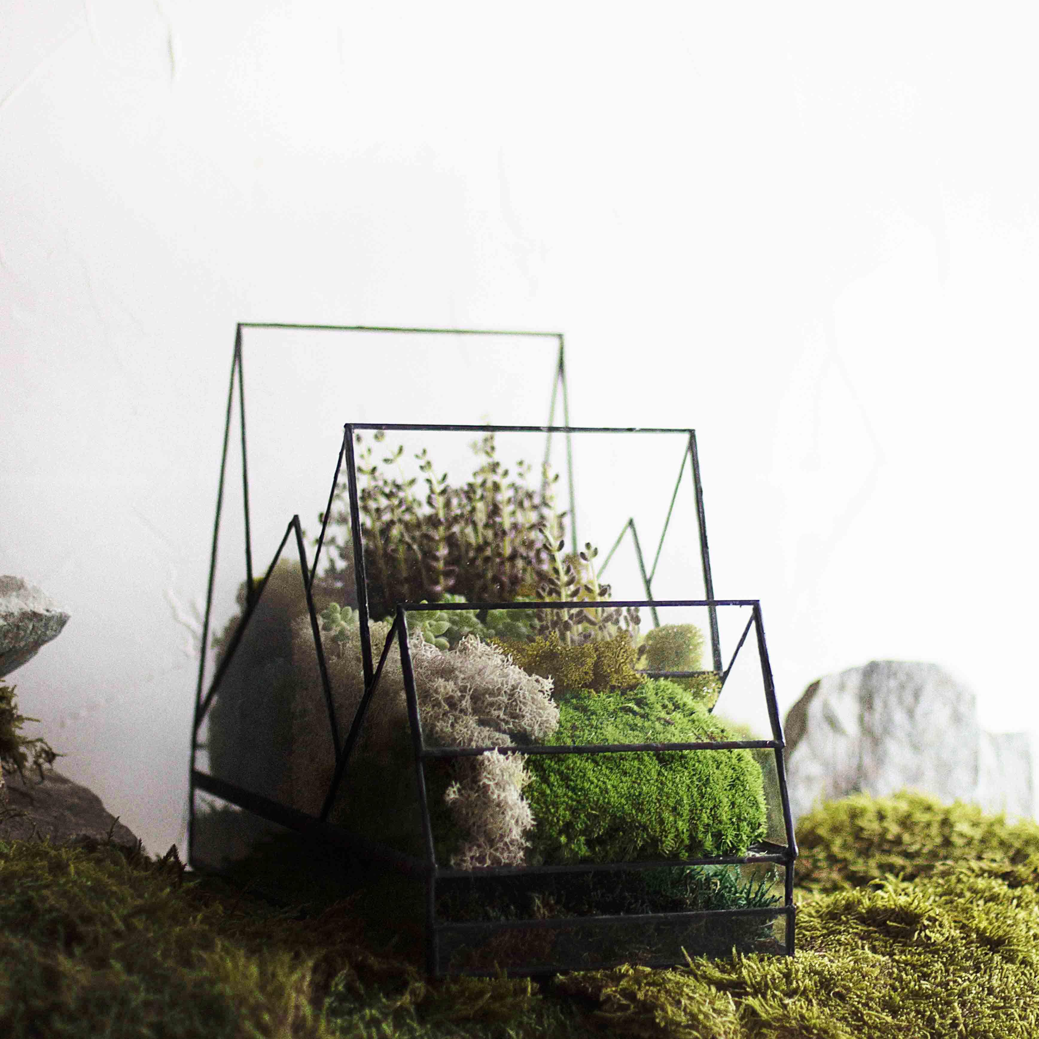 растения стекло подарок флорариум светильник ночник лампа свет геометрия gift florarium plant glass geometric