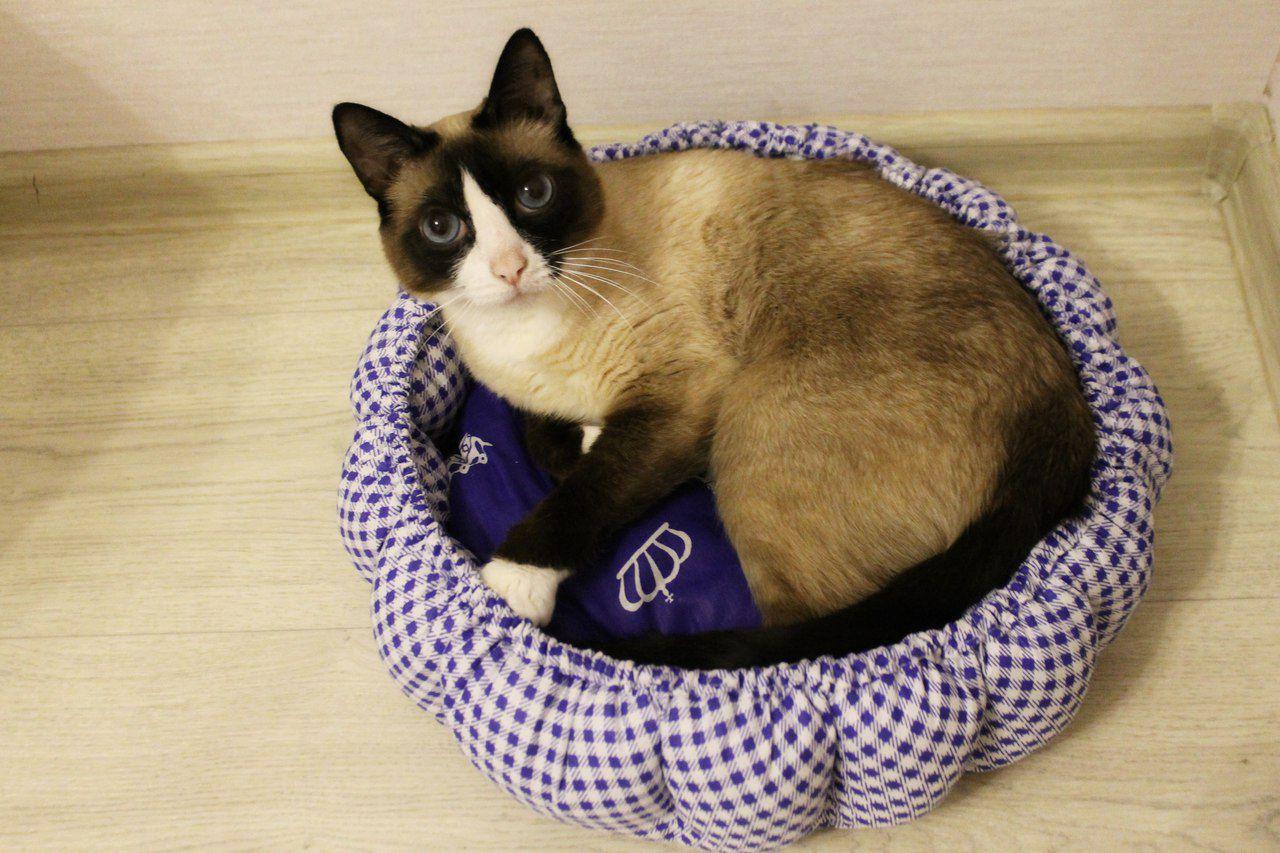 любимец питомец лежанка уют кошка животные