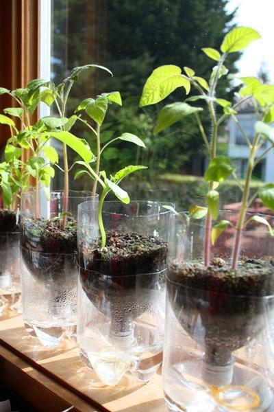 ваш сад творческие идеи растения