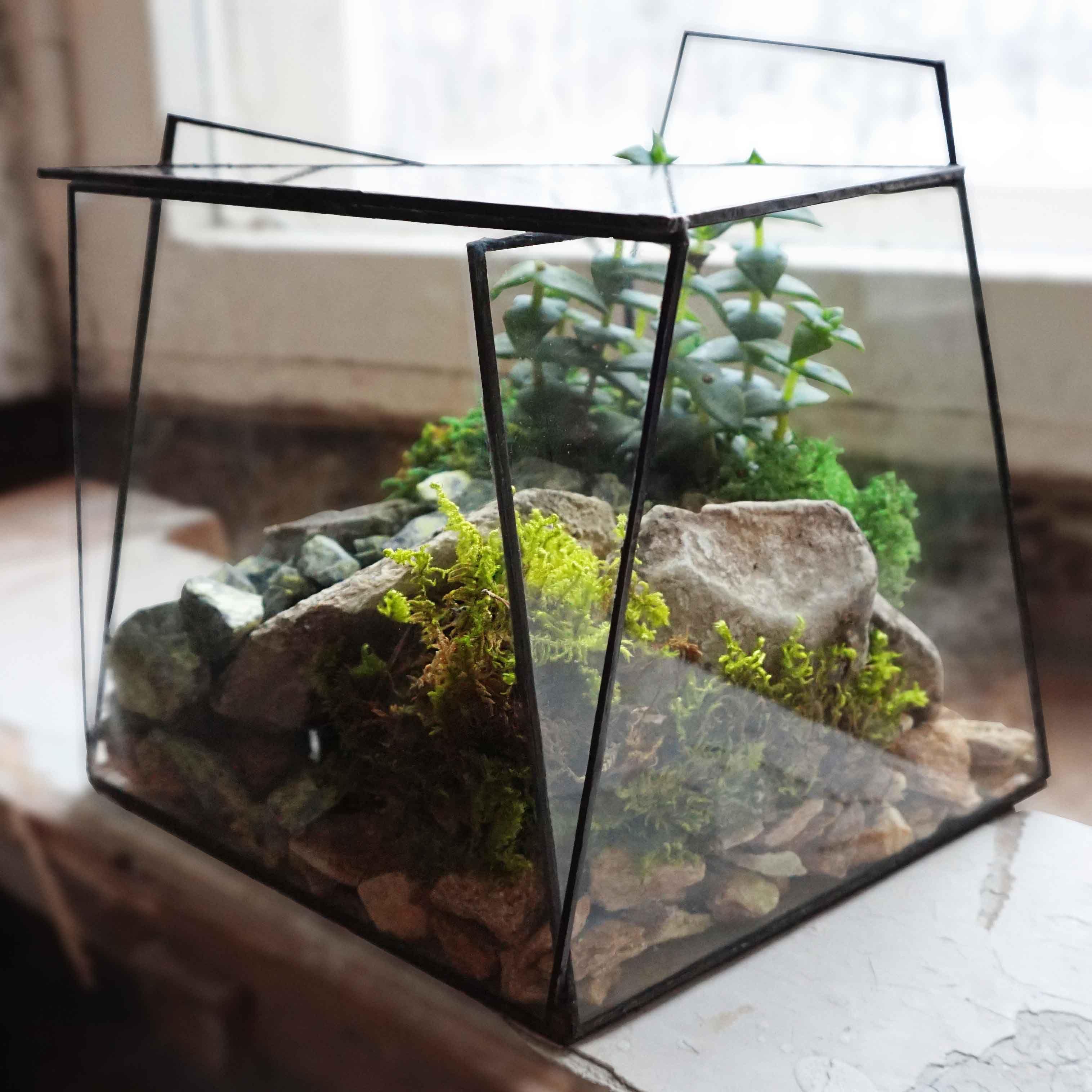 стекло флорариум растения геометрия gift florarium plant glass geometric подарок
