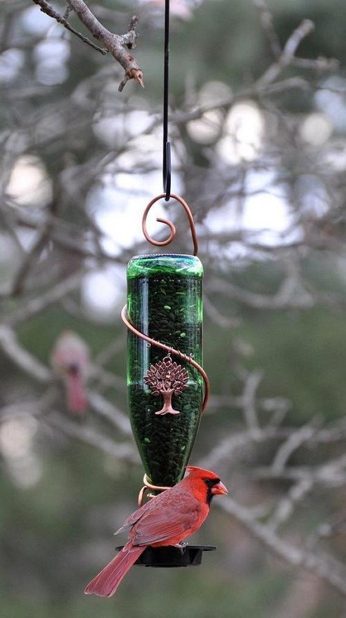 птиц из бутылки для своими руками кормушка