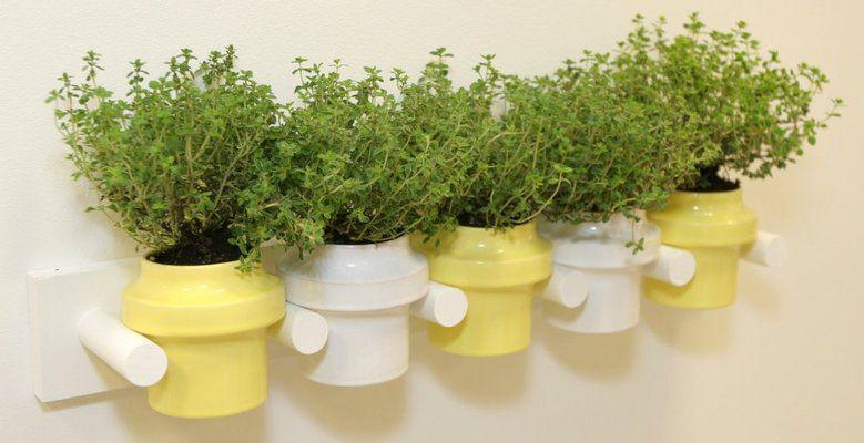 специи зелень растения весна