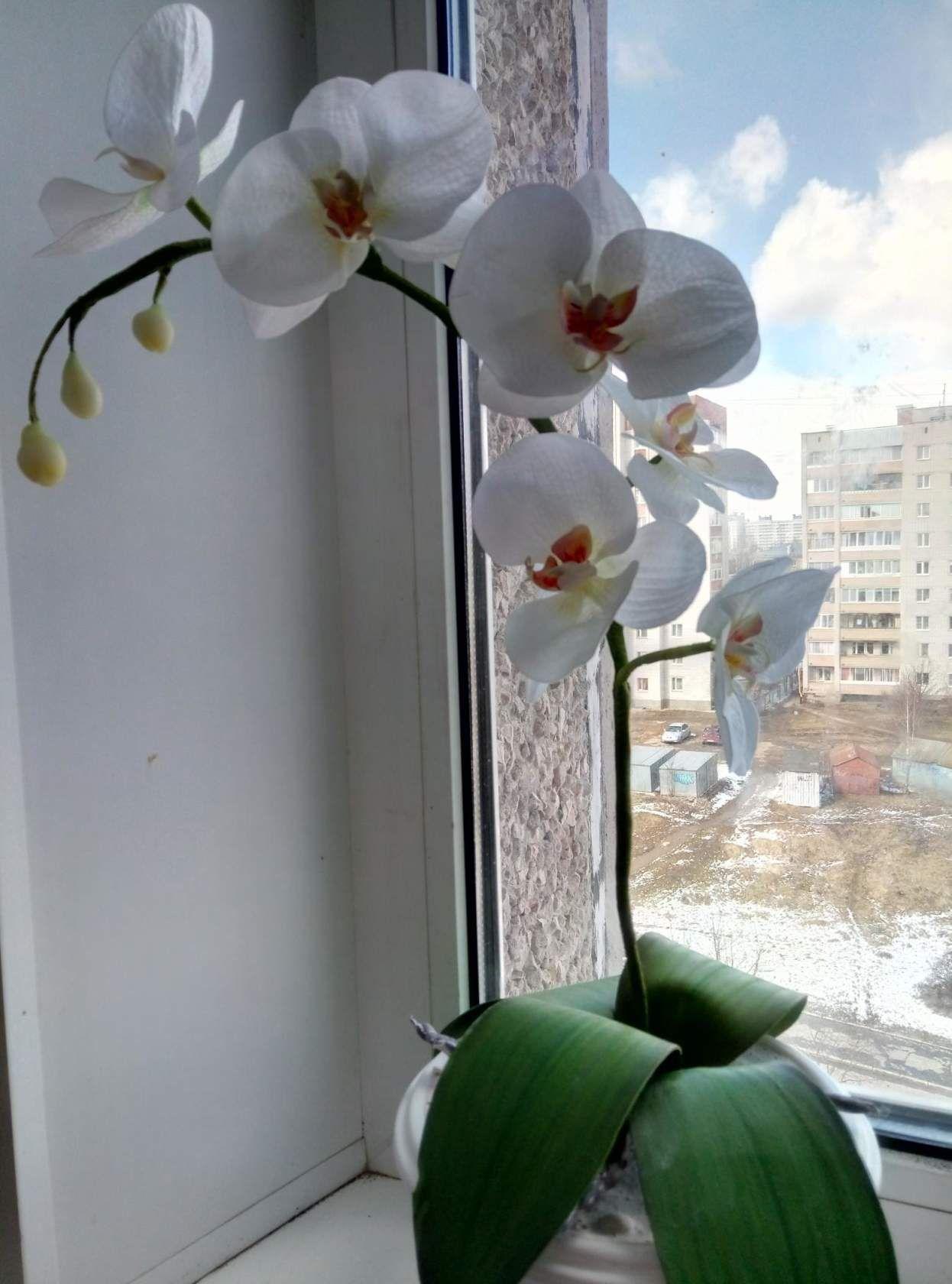 орхидея фоамиран интерьер ручная работа