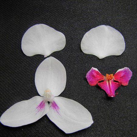 Орхидея из бисера мастер класс 1