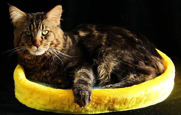 домашние кота питомцы мастеркласс лежанка для животные