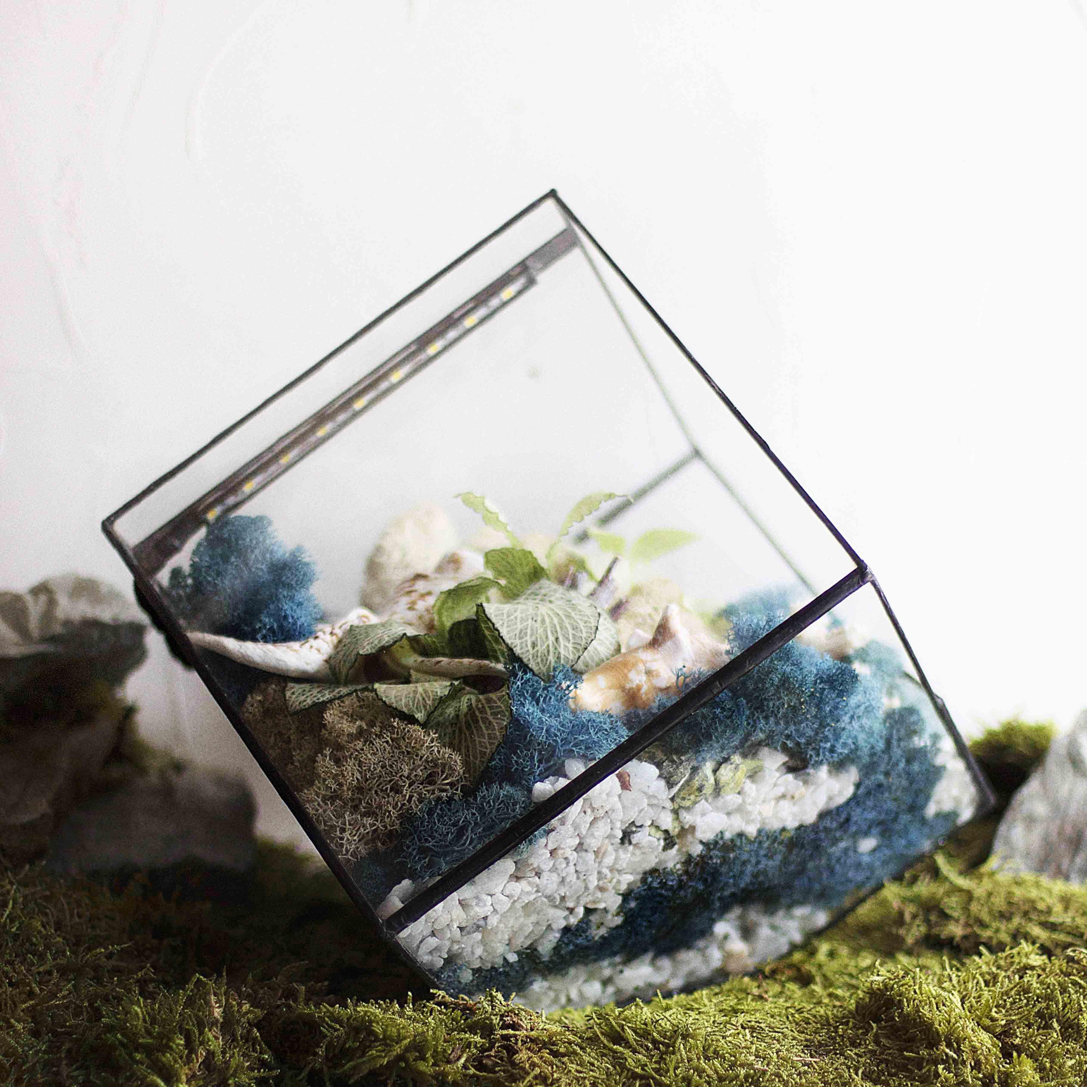 растения стекло лампа флорариум светильник ночник gift свет геометрия подарок florarium plant glass geometric