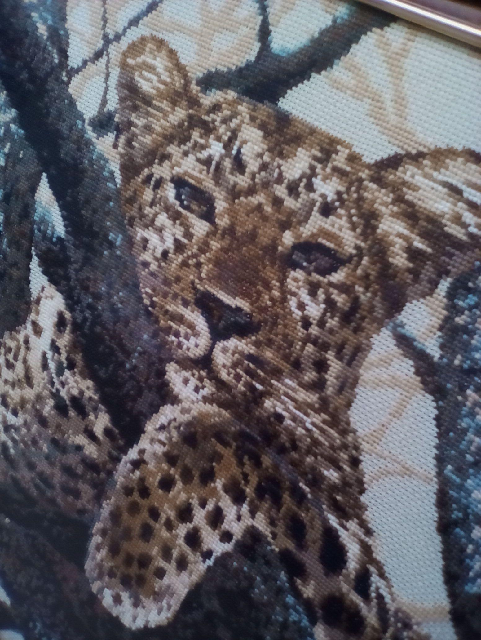 леопард париж мишек троицы площадь семейство