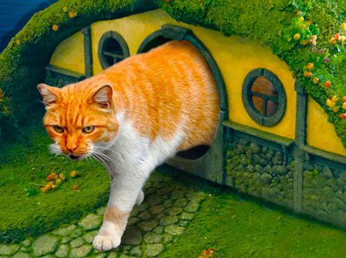 для домик руками кошки своими