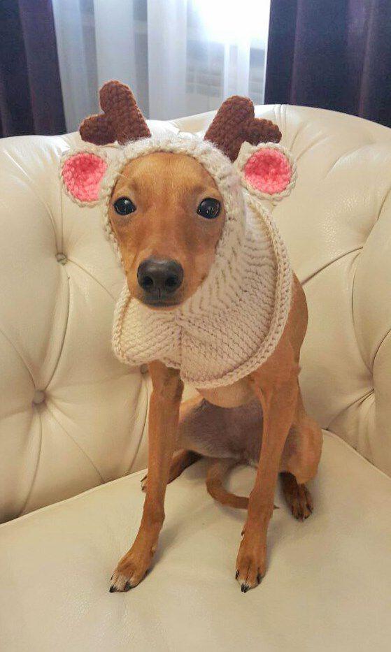 длясобаки вязаниеназаказ собаке вяжутнетолькобабушки. животным щапкадлясобаки. ливретка вяжуназаказ шапка вязание тепло олень зверошапка уют