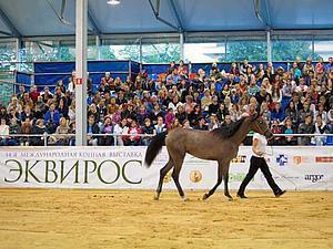 коллективныйстенд выставка лошади эквирос