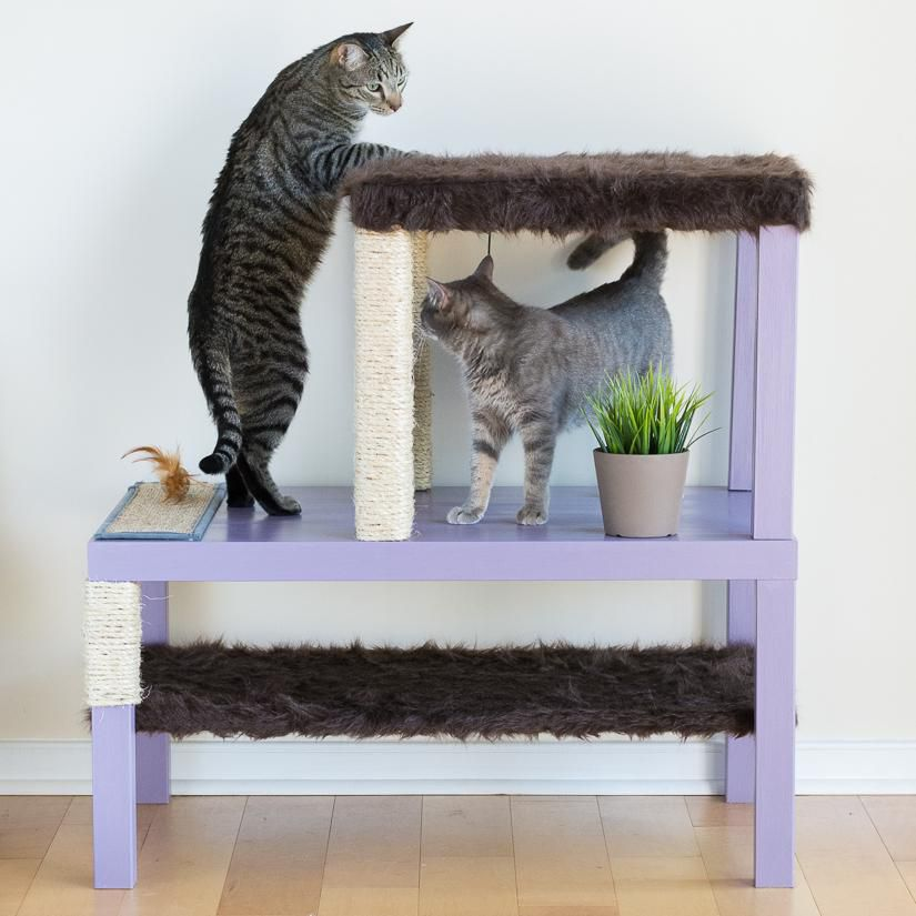 для мастеркласс питомцы кошки домик