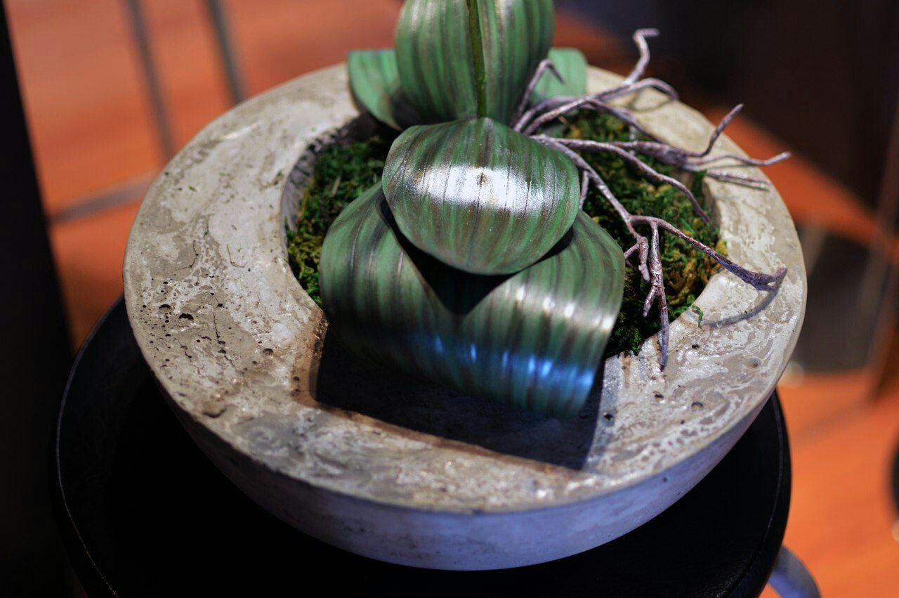 цветыназаказ handmade орхидеяназаказ фоамиран доставкацветов orchid kyks_fom_hm монстера суккулент ручнаяработа