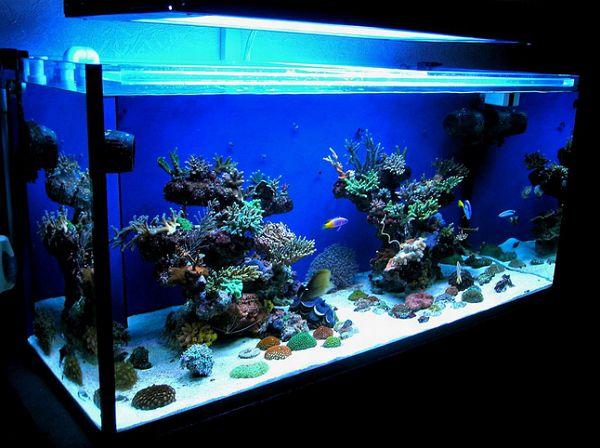 аквариум руками своими
