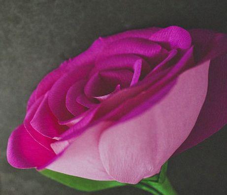 бумаги розы из руками своими