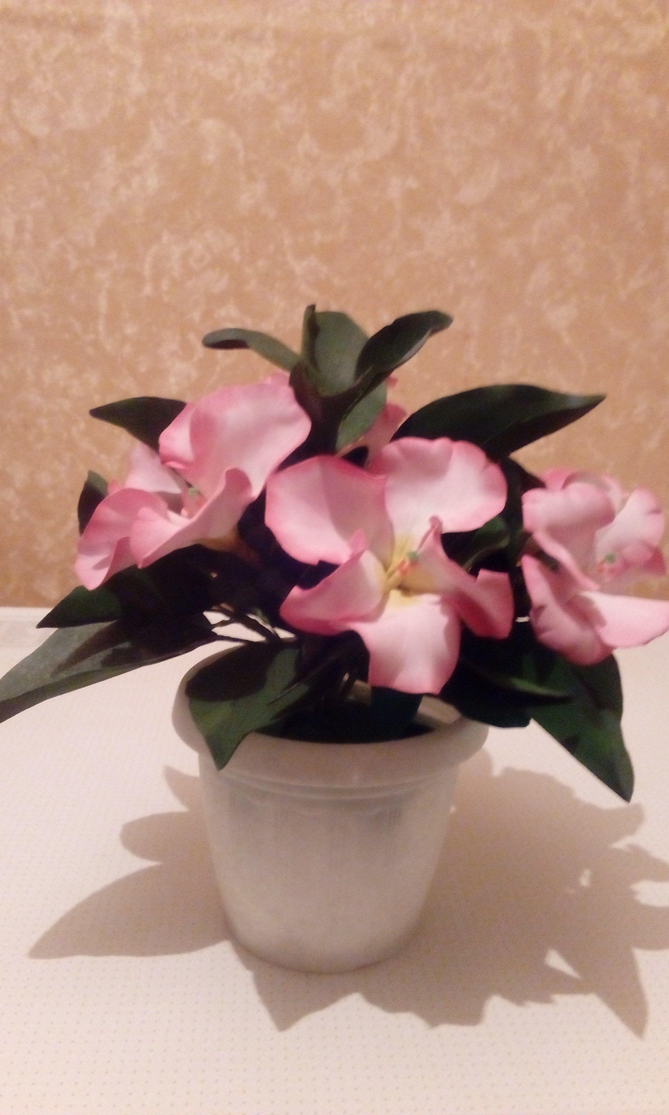подарки цветы