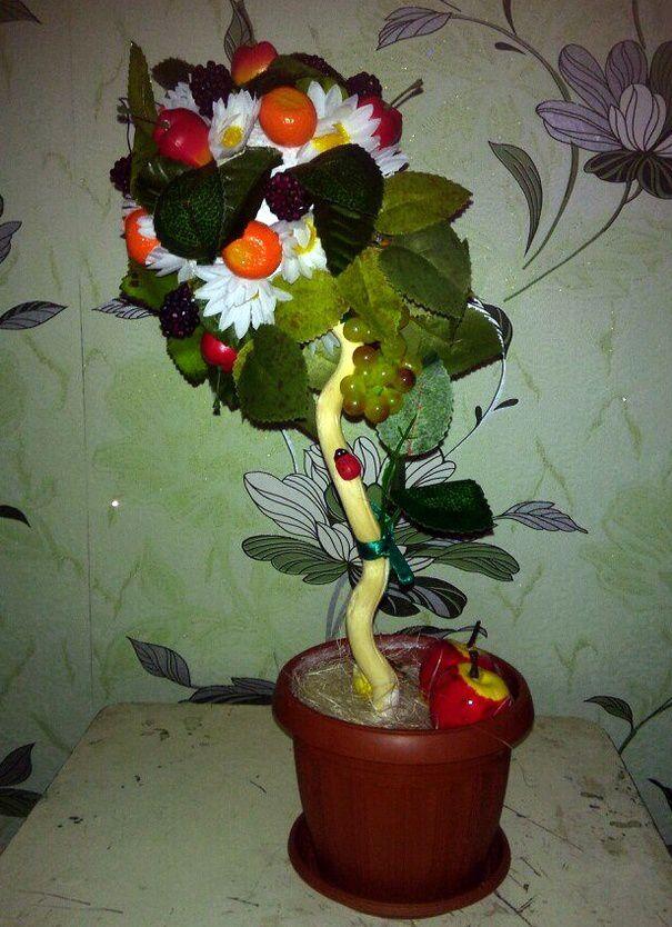 ториарий деревце дерево фрукты