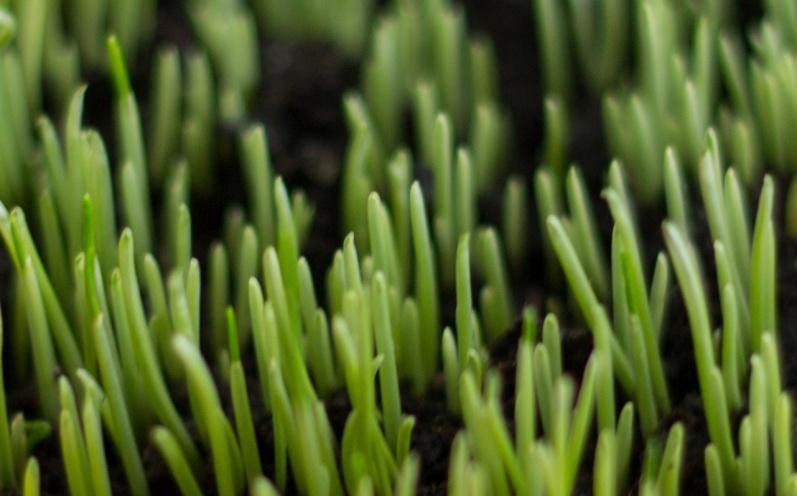 трава зелень пасха яйца