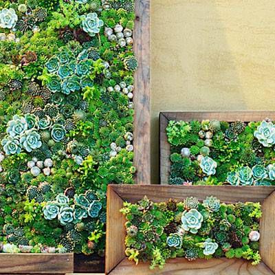 картины цветами для руками своими поделки идеи декора сам дома суккуленты сделай ремесло живые