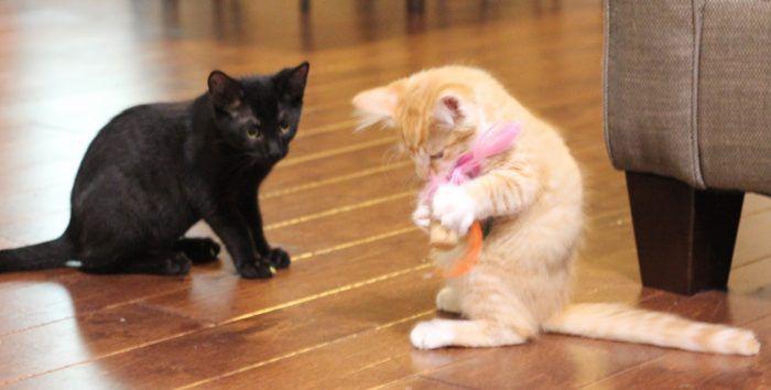 домашние животныесделай котят котята игрушки для руками своими сам