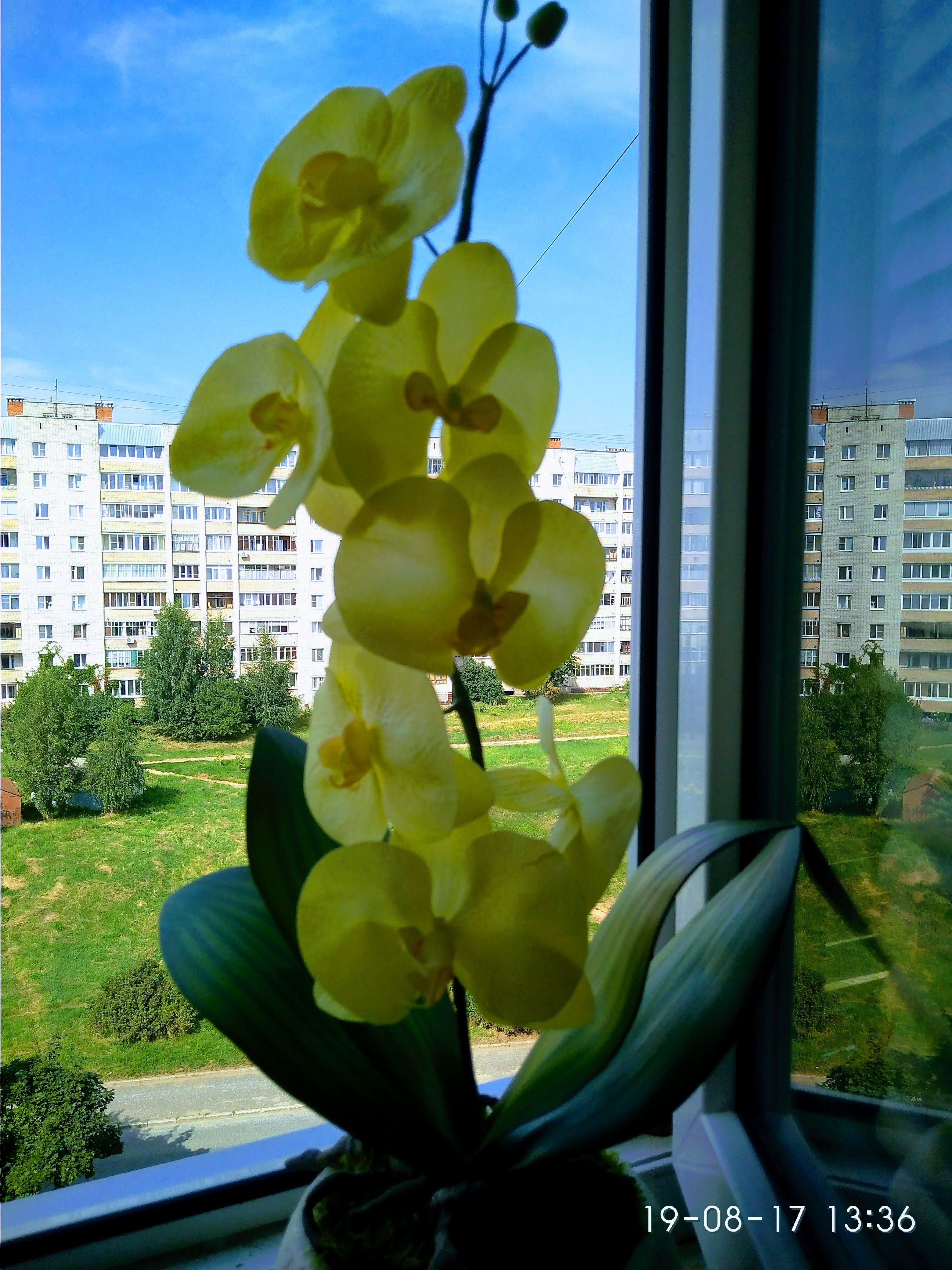 фоамиран орхидея ручная интерьер работа