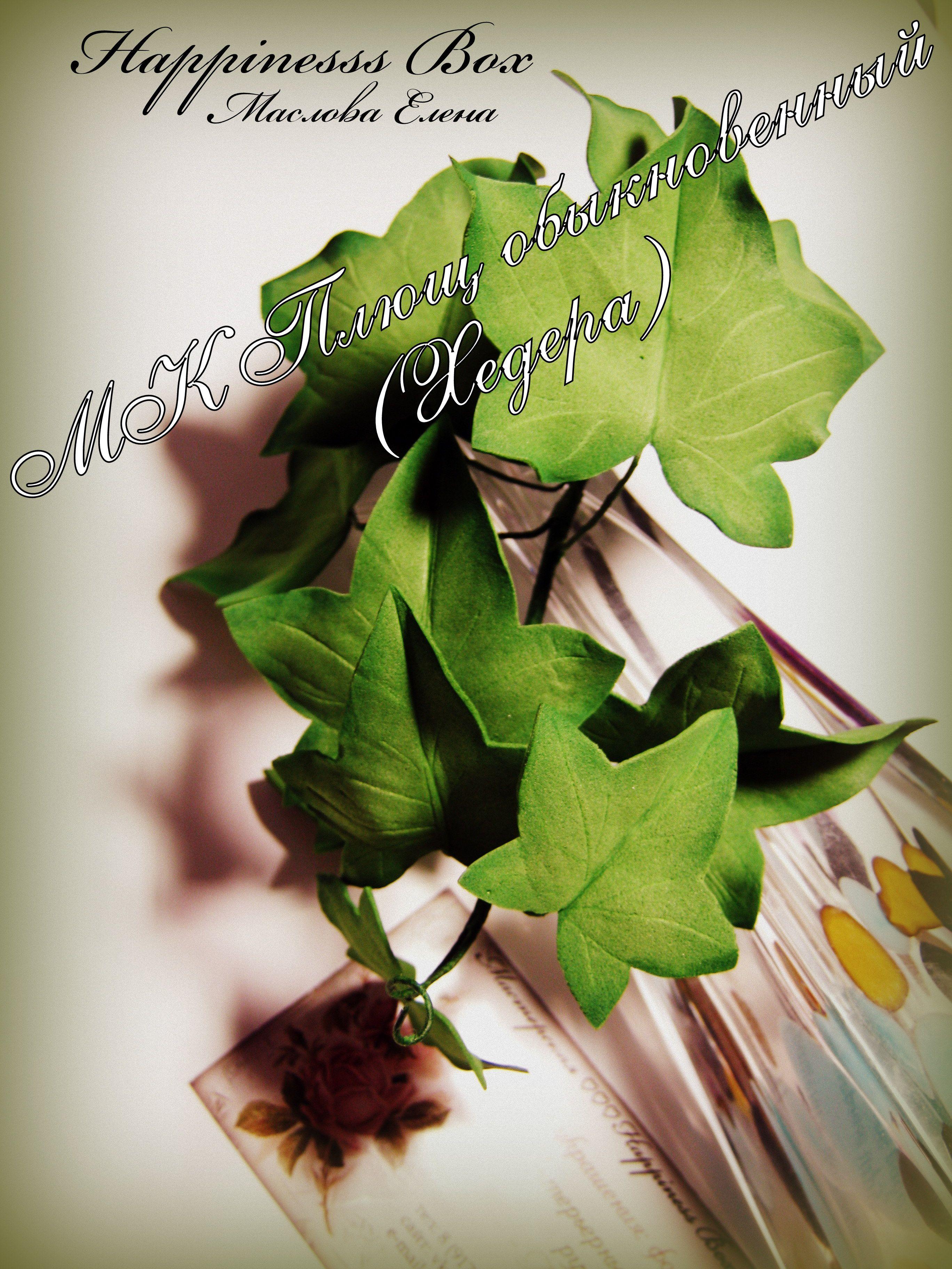 пластичнаязамша хедера масловаелена цветыручнойработы ревелюр мастеркласс украшение фоамиран интерьер флористика happinessbox фом плющ цветы