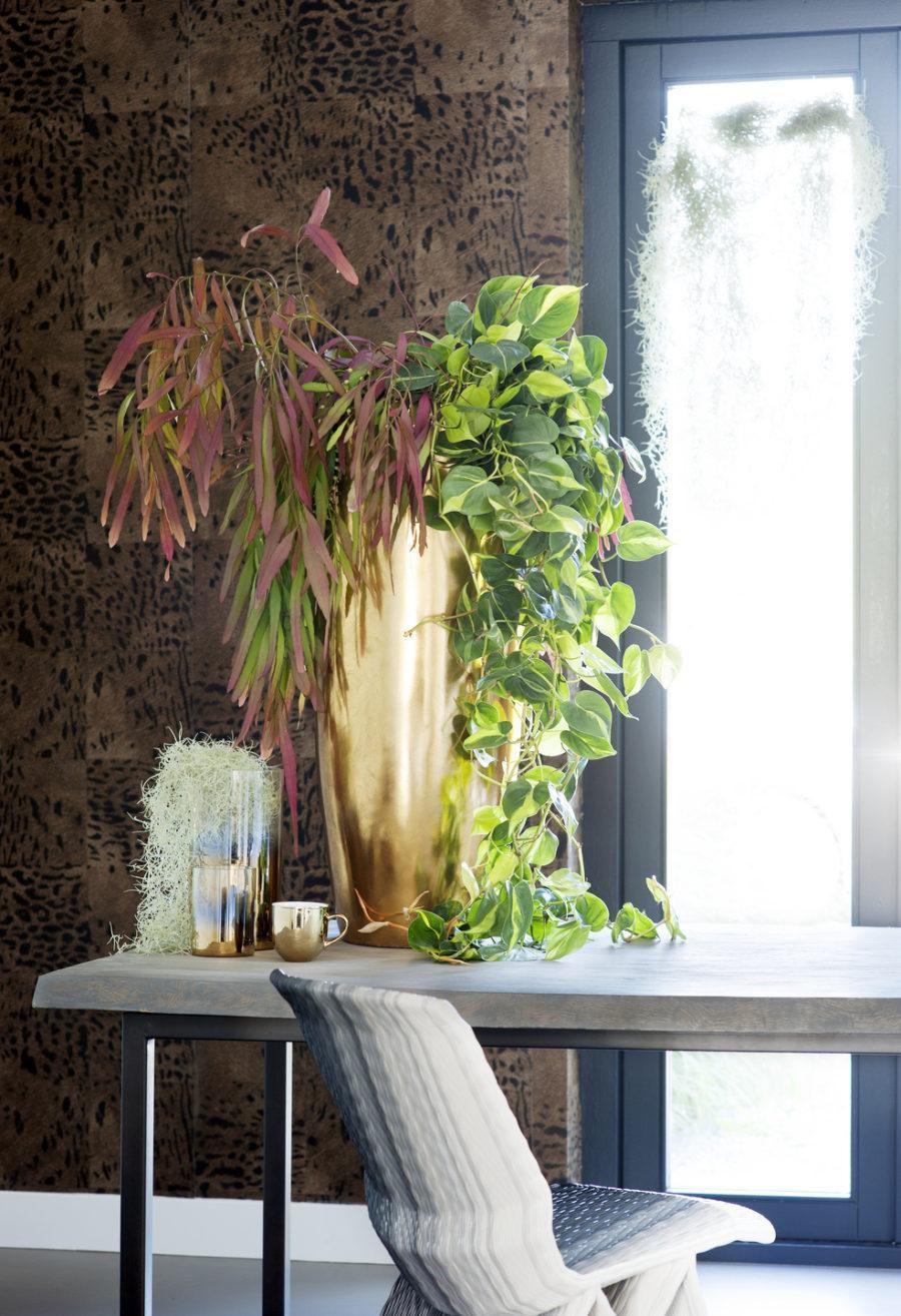 быт интерьер дом растения
