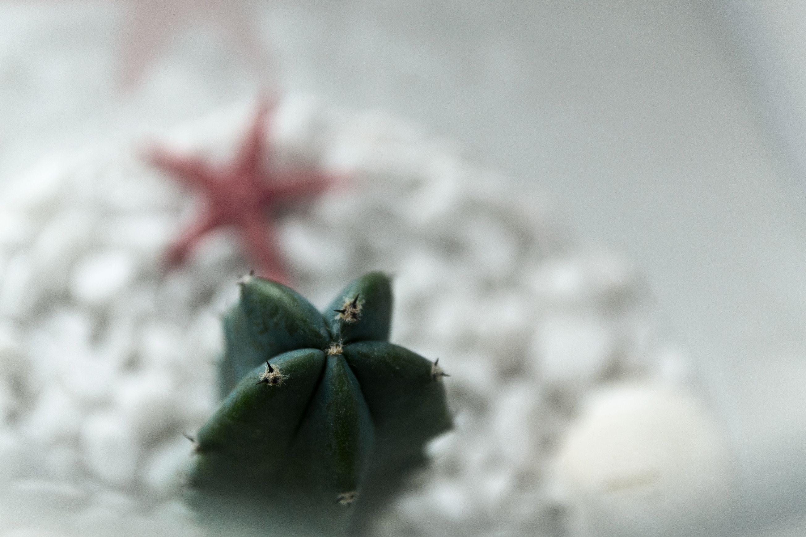 суккулент кактус подарок цветок минисад флорариум кактусы цветы суккуленты