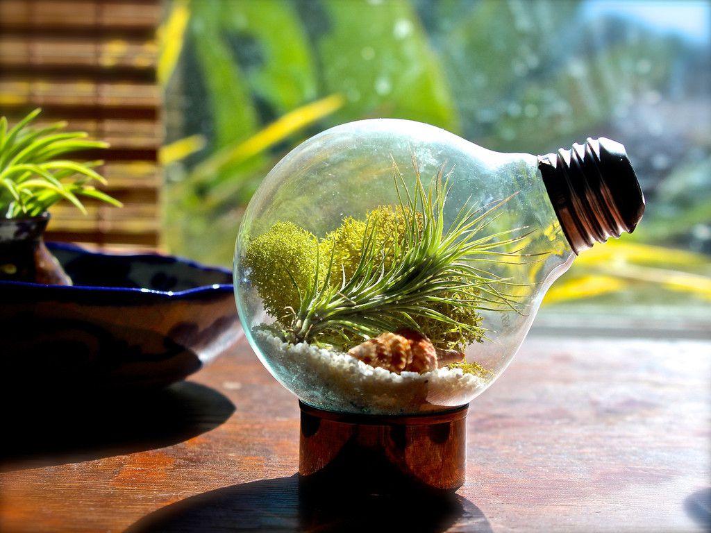 минисад лампочка экосистема