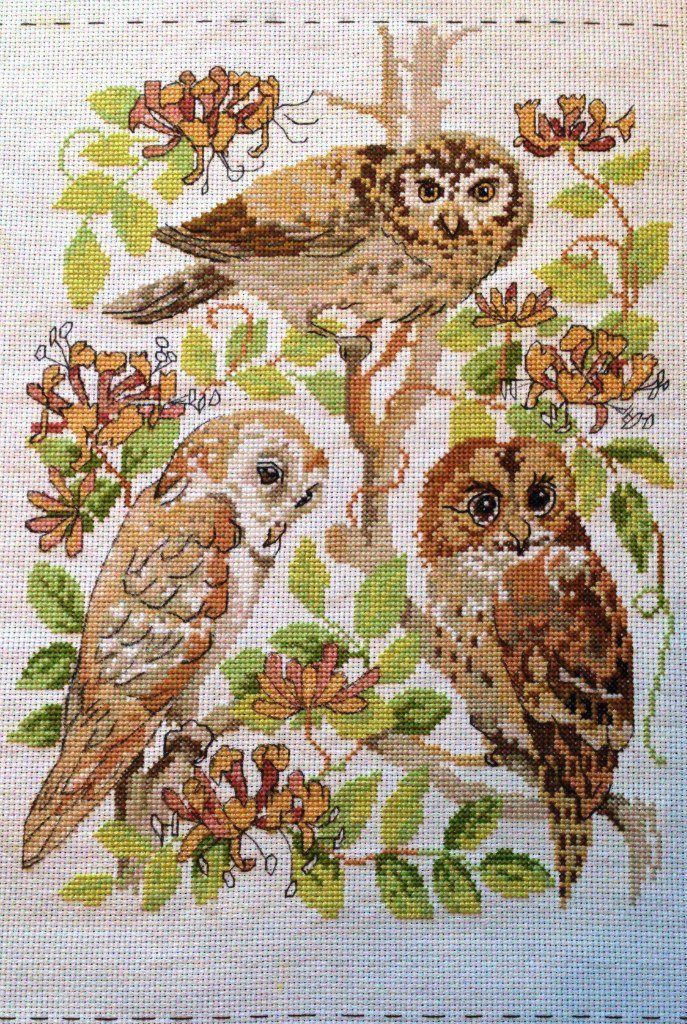 вышивка совы крестом животные картины питомцы природа птицы