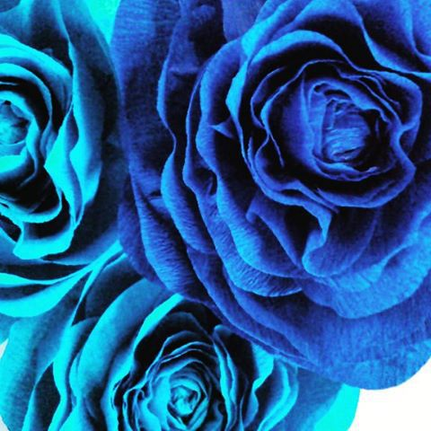 гигантскиецветы бумажные цветы подарок