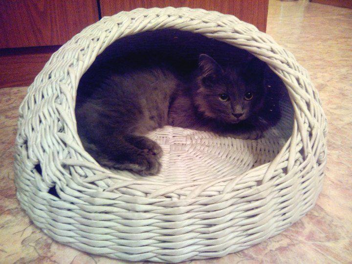 любителям любимец питомец кошек заказ хендмейд кошки домик дом уют из лежанка работа котэ ручная для животные домашние плетение газет кошка