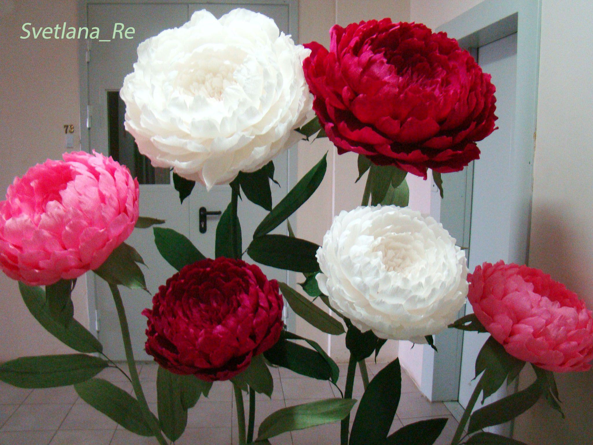 куст гофробумага пионы искусство цветы творчество свадьба