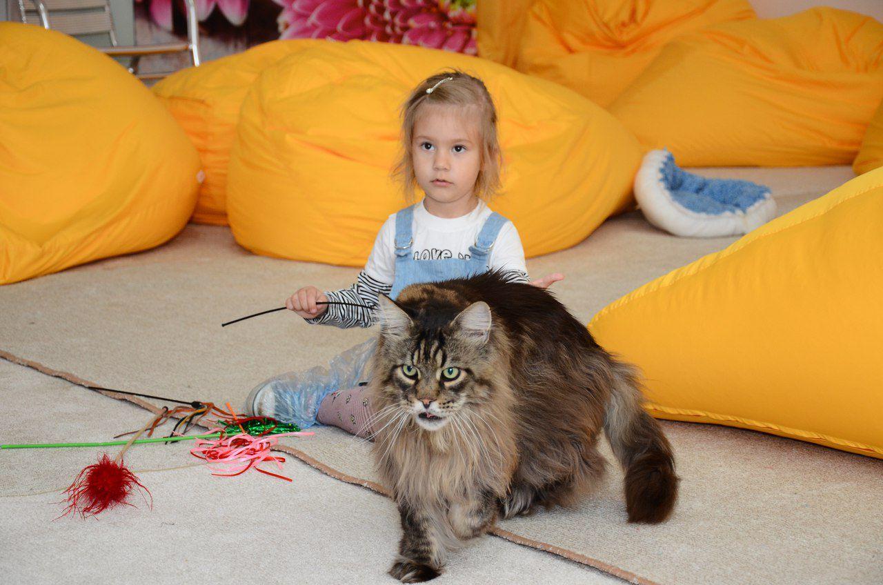 любимцы кошки выставка