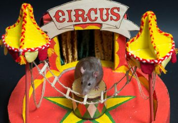 Old circus.Миниарт