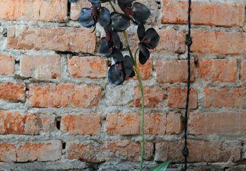 Черная орхидея из фоамирана