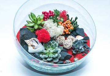 Флорариум-интересная альтернатива букету цветов