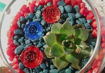 В царстве каменных роз...