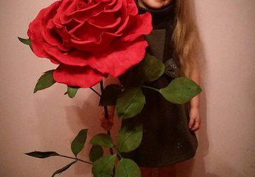 Огромная роза