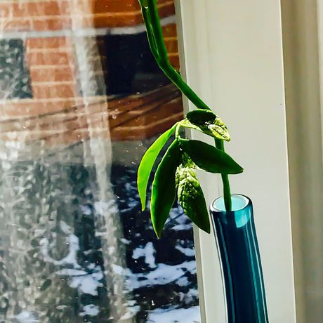 пион handmade полимернаяглина мк холодныйфарфор цветок ручнаяработа мастеркласс