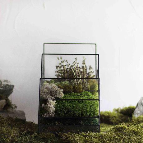 gift ночник геометрия светильник лампа флорариум растения свет подарок стекло florarium plant glass geometric