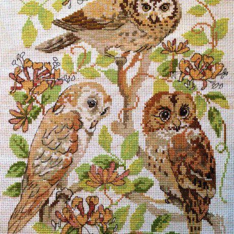 совы вышивка картины крестом животные питомцы птицы природа