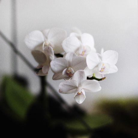 gift геометрия флорариум растения подарок стекло florarium plant glass geometric