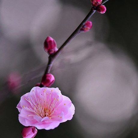 justval рубин handmade сакура ручнаяработа кулон розовыйкварц подарок
