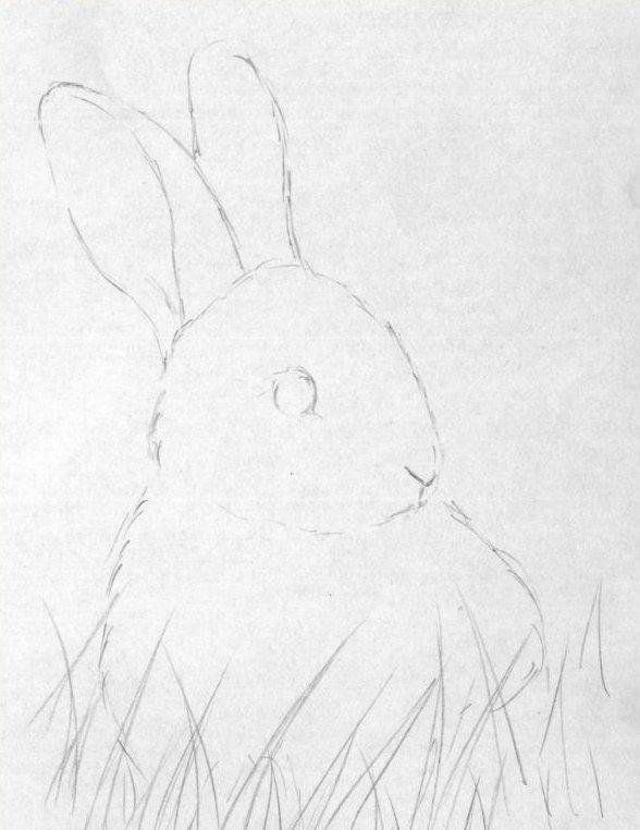 in soft pencil b2 draw the eyes with a flare in soft pencil b refine the rabbit fur on the snout