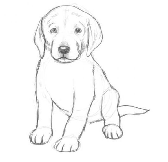 How Can You Draw A Dog