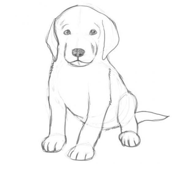 Contour Line Drawing Dog : How to draw dogs